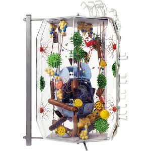 Komórka ludzka i zwierzęca