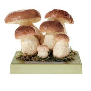 Modele grzybów