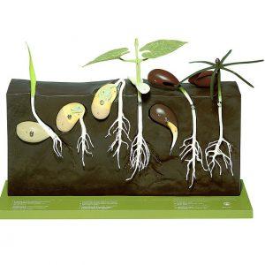 Rozmnażanie roślin
